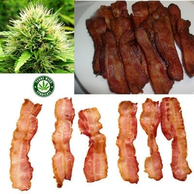 Cannabis Infused Bacon & THC Grease