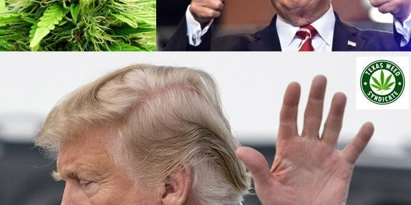 Trump Support Marijuana Legalization