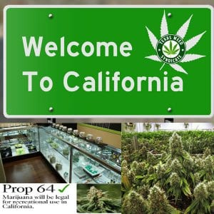 Californians Are Still Going To Their Regular Old Dealer Despite Of Legalization