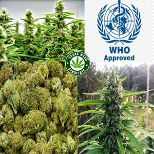 The World Health Organization Gets It Will The USA?