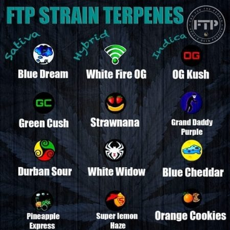 Terpene Strains Available In CBd Cartridges